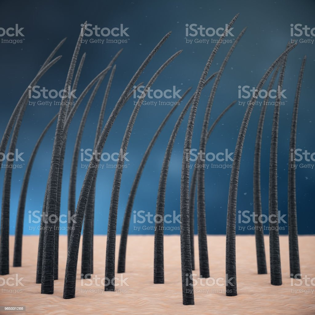 3D Rendering hair keratin strengthening, hair care. Treatment and care of hair. Hair with skin under microscopic close-up view. royalty-free stock photo