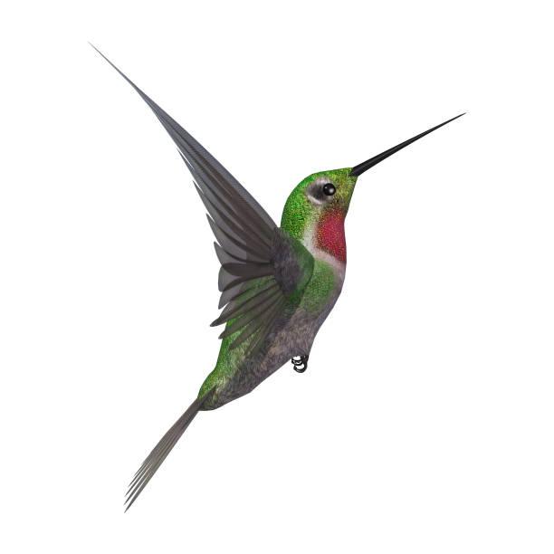 3d-rendering humming bird på vit - kolibri bildbanksfoton och bilder