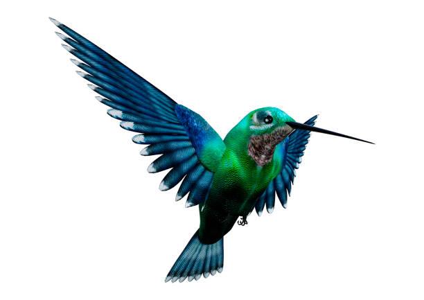 3d rendering humming bird on white - bird stock photos and pictures