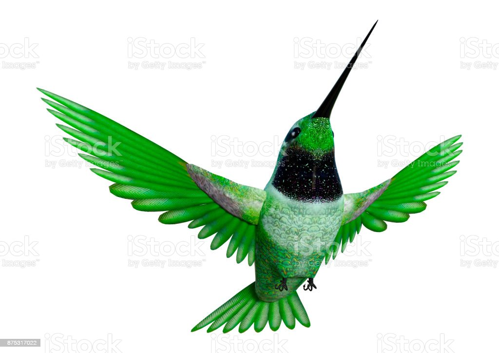 3D rendering hummingbird on white stock photo