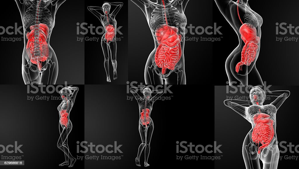 3D rendering illustration of the digestive system stock photo