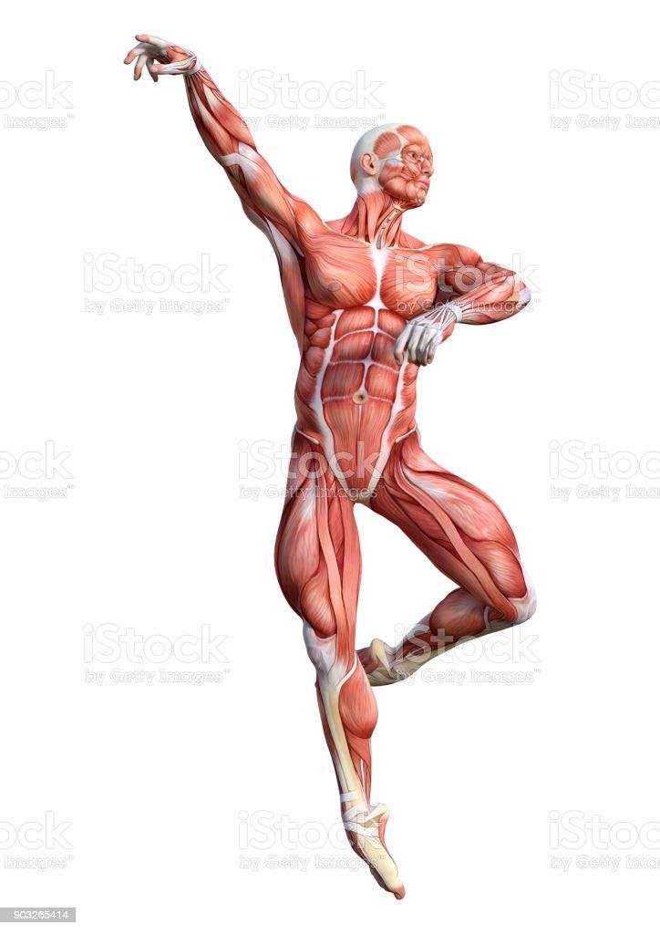 Enchanting 3dtotal Anatomy Figure Motif - Anatomy Ideas - yunoki.info