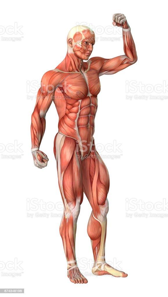 Fotografía de Figura De Anatomía Masculina De Renderizado 3d Con ...