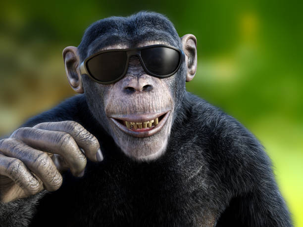 3D rendering of a chimpanzee wearing sunglasses. stock photo
