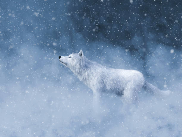 3D rendering of a majestic white wolf in snow. stock photo