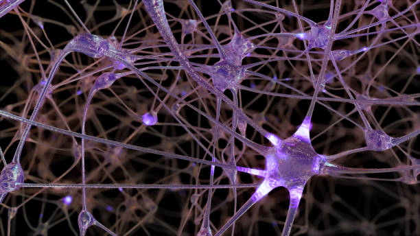 3D rendering of a network of neuron cells and synapses in the brain through which electrical impulses and discharges pass stock photo