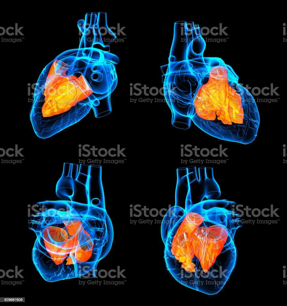 3D rendering of the Heart atrium stock photo