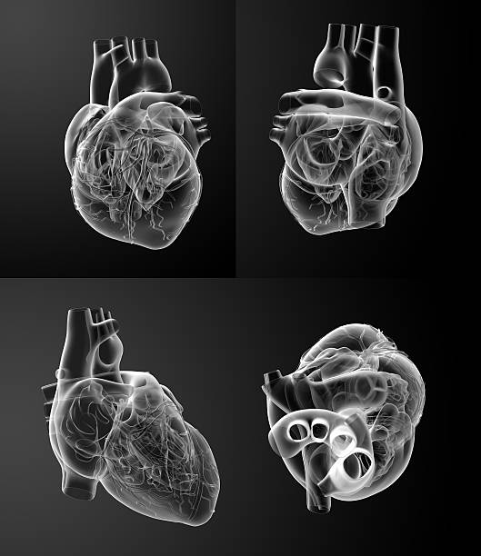 3D rendering of the White heart – Foto