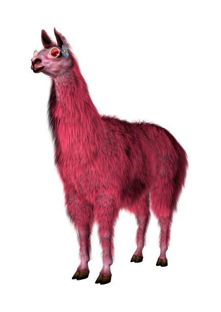 3D Rendering Lama rosa sobre blanco - foto de stock