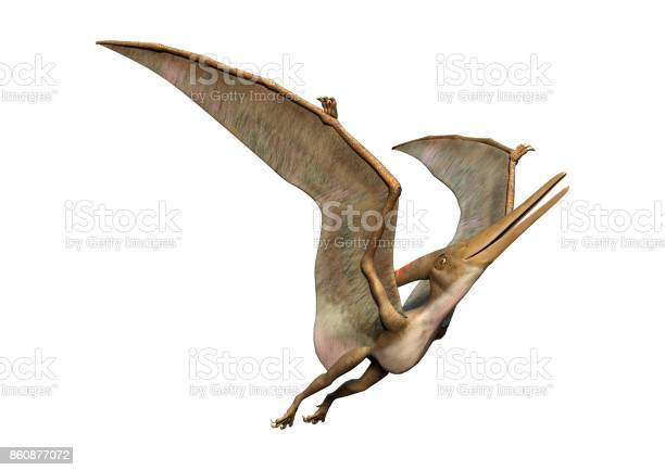 Rendering prehistoric flying reptile pteranodon on white picture id860877072?b=1&k=6&m=860877072&s=612x612&h=qtraq5or2tgcefhyqclnokmkqn0ofoinwvz8t8vhb2e=