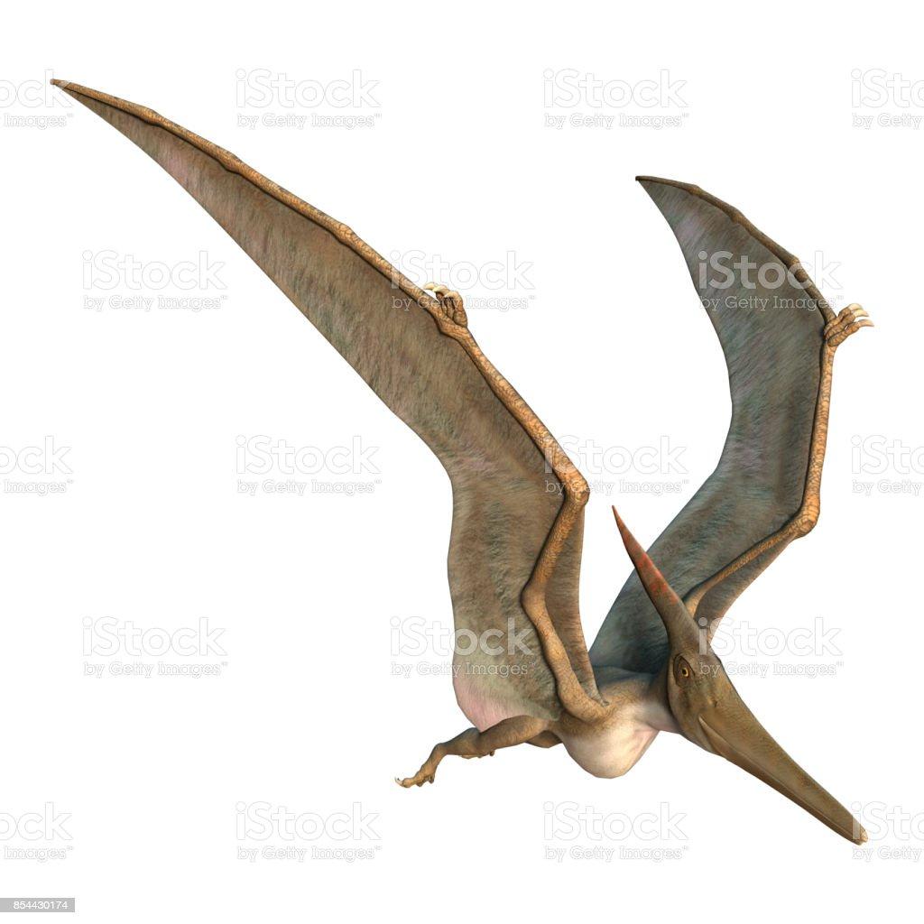 3D rendering Pteranodon on white stock photo