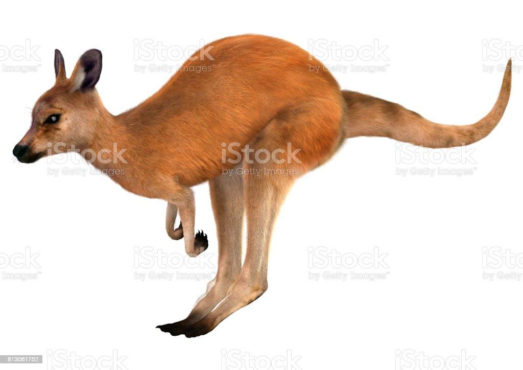 3D Rendering Red Kangaroo on White stock photo