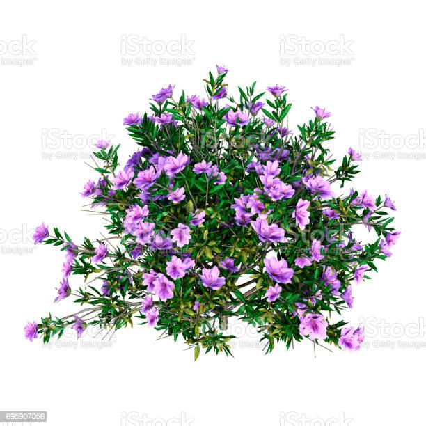 Photo of 3D Rendering Rhododendron on White