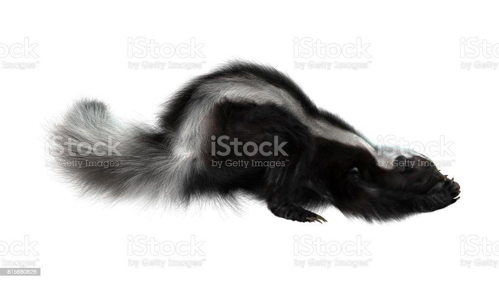 3D Rendering Skunk on White stock photo