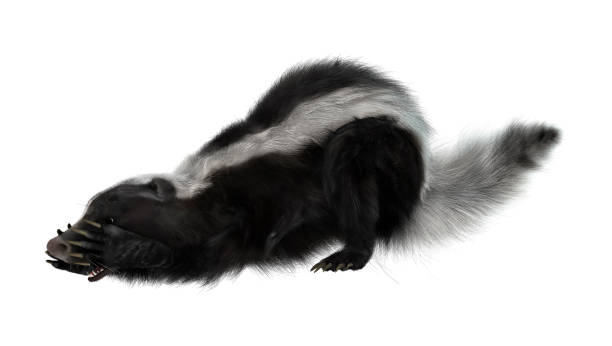 3d rendering skunk on white - skunk stock photos and pictures
