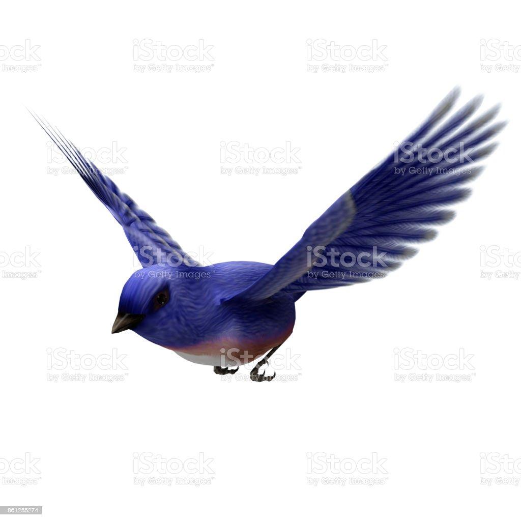 3D rendering songbird eastern blue bird on white stock photo