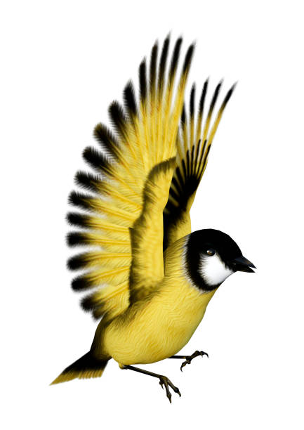 3D rendering songbird goldfinch on white 3D rendering of a flying songbird goldfinch isolated on white background gold finch stock pictures, royalty-free photos & images