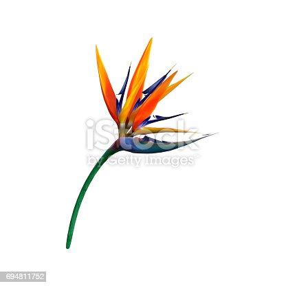 istock 3D Rendering Strelitzia or Bird of Paradise Flower on White 694811752
