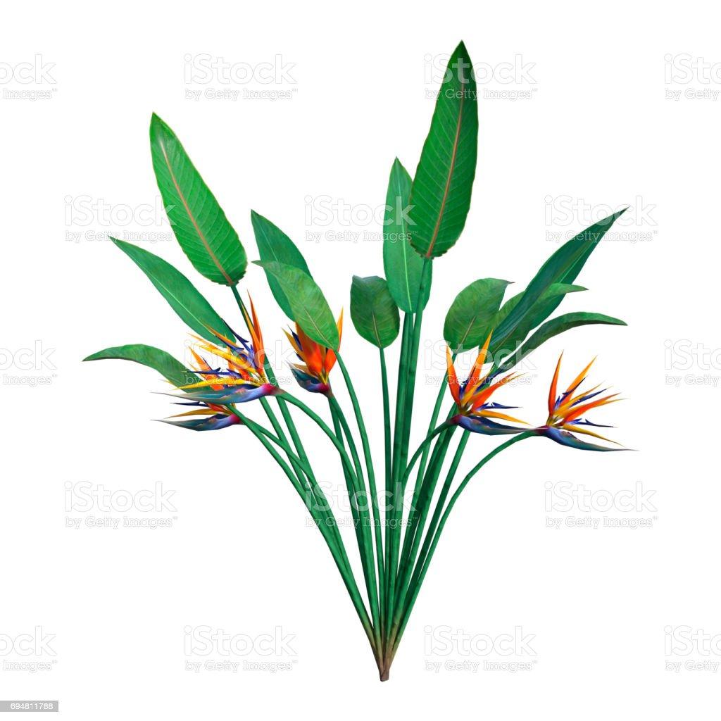 Renderização 3D Strelitzia ou flor ave do paraíso em branco - foto de acervo