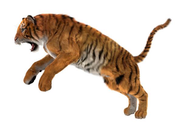 Rendering tiger on white picture id921894166?b=1&k=6&m=921894166&s=612x612&w=0&h=atgxfuekxpahae az5don qxj2rbh7zfdiwmlg5 d9c=