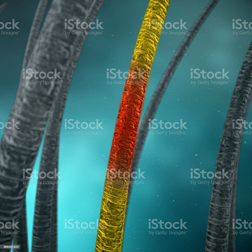 3D Rendering weakened hair. Concept of hair loss. Unfortified, unhealthy hair. Hair with under microscopic close-up view. royalty-free stock photo