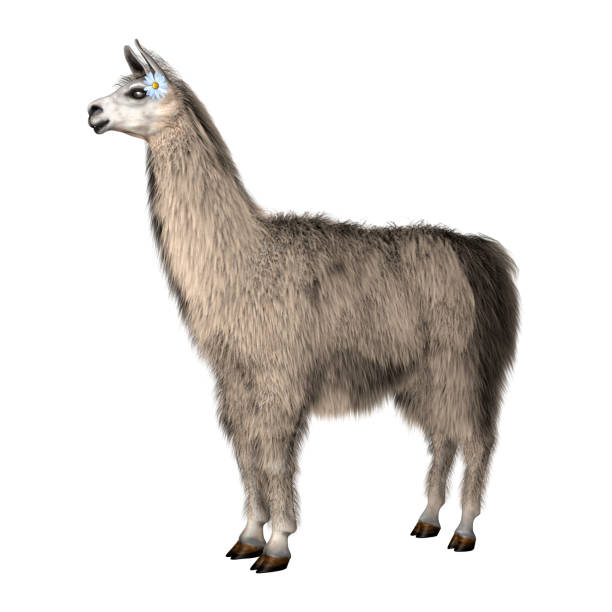 3D Rendering White Lama on White stock photo