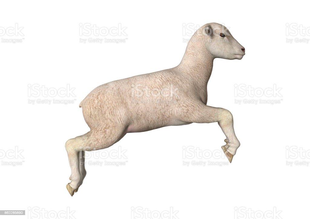 3D rendering white lamb on white stock photo