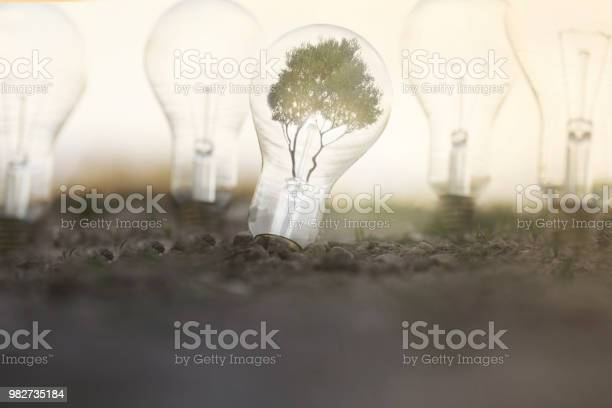 Renewable energy with light bulbs that take energy from the sun from picture id982735184?b=1&k=6&m=982735184&s=612x612&h=hxb34nlxjbrbwmzuxh6pficlj6uitvla6fidj15 avi=
