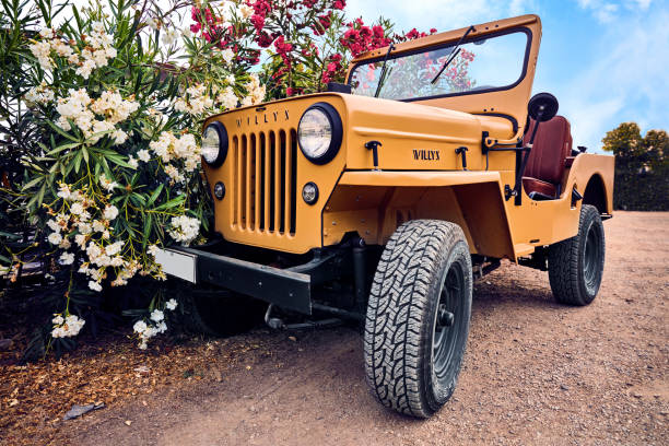 Renewed Willy's Jeep parked on a dirt road near oleander flowers. Bodrum, Turkey - August, 2017: Close-up shoot of a renewed Willy's Jeep parked on a dirt road near oleander flowers. willys stock pictures, royalty-free photos & images