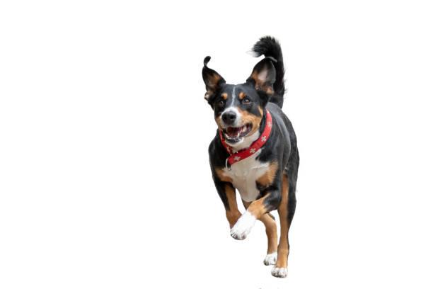 Rennender hund freigestellt picture id1068785566?b=1&k=6&m=1068785566&s=612x612&w=0&h=rtqln4rjmn4thckmloqwmaol0fxg2bc7g1sxudjcgpw=