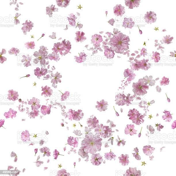 Repeatable ornamental sakura blossom breeze picture id495851557?b=1&k=6&m=495851557&s=612x612&h=ny2fkhyiugdusub23qbnqv h owapvfsbgcr16lsnqw=