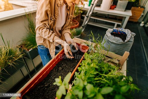 Photo of a young woman arranging plants in her rooftop garden