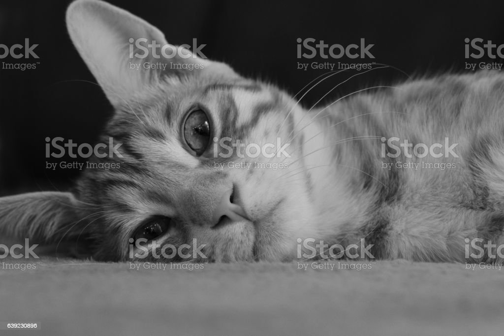 Repos du chat stock photo