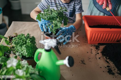 Mother is repotting flower with her kid