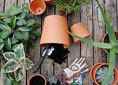 istock Repotting Houseplants Flatlay. 1225441445