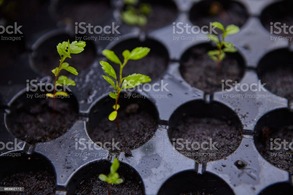 Re-Potting - Royalty-free 2018 Stock Photo