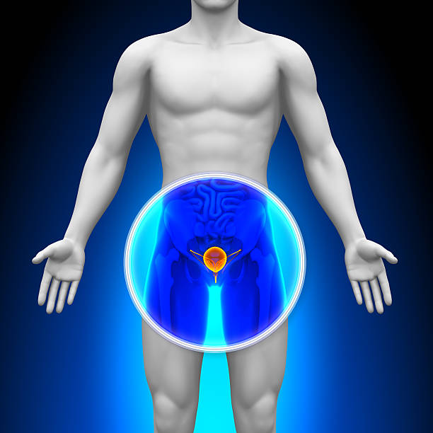 representation of medical x-ray scan showing the prostate - prostaat stockfoto's en -beelden