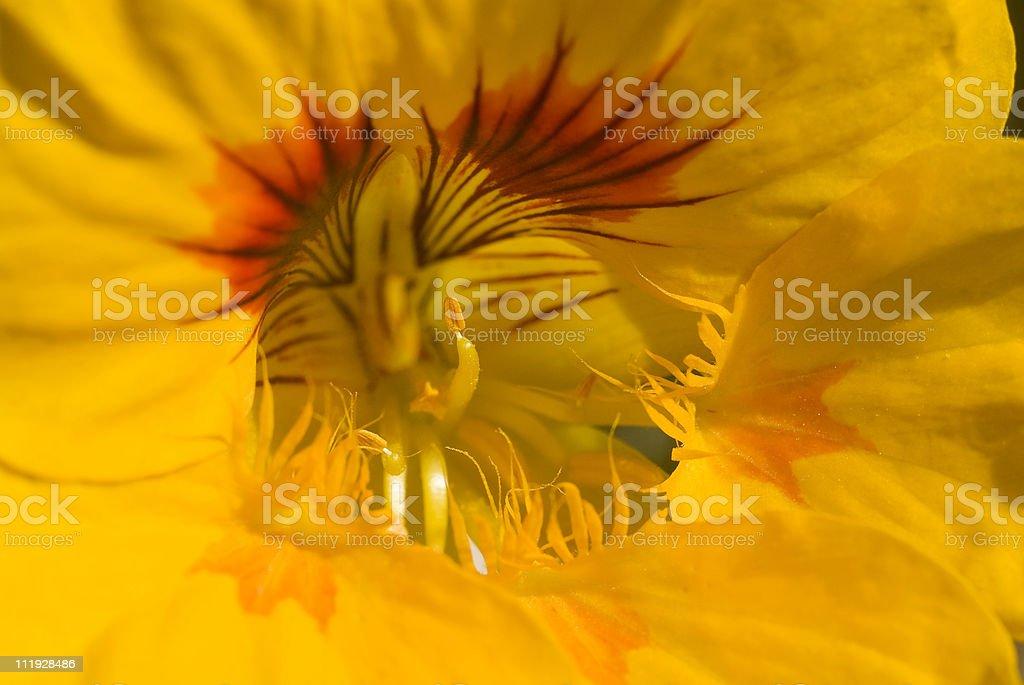 reproduction des fleurs royalty-free stock photo