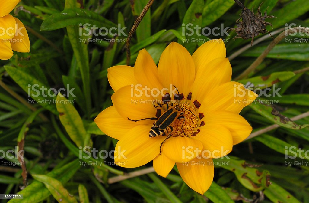 Reproduction of a Flower royalty-free stock photo