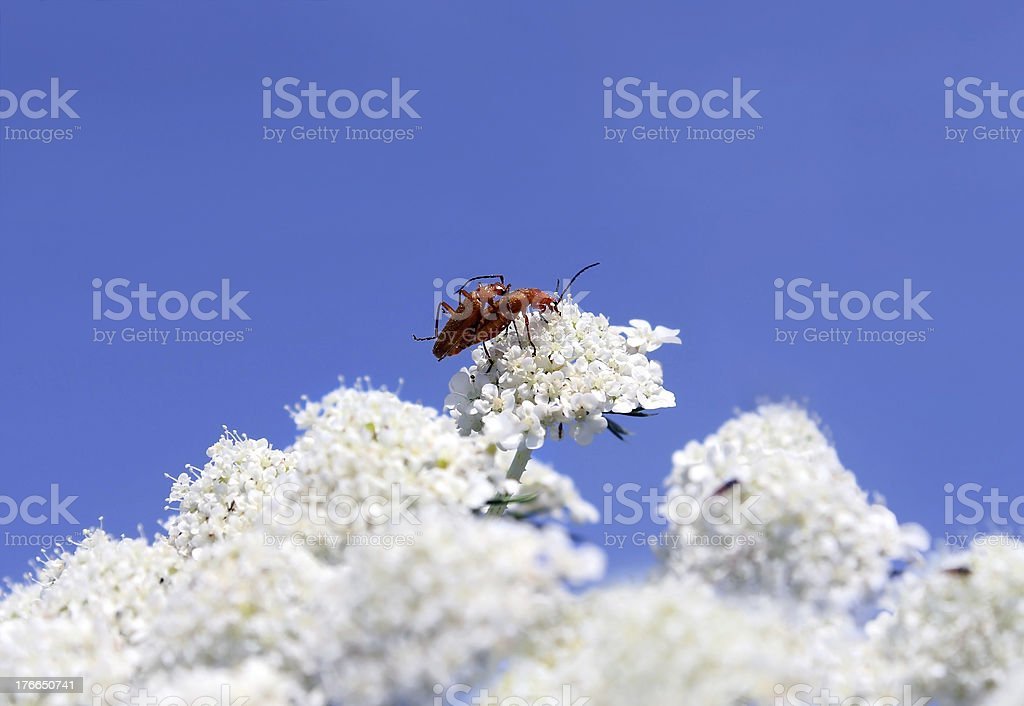 reproduction of insects royalty-free stock photo