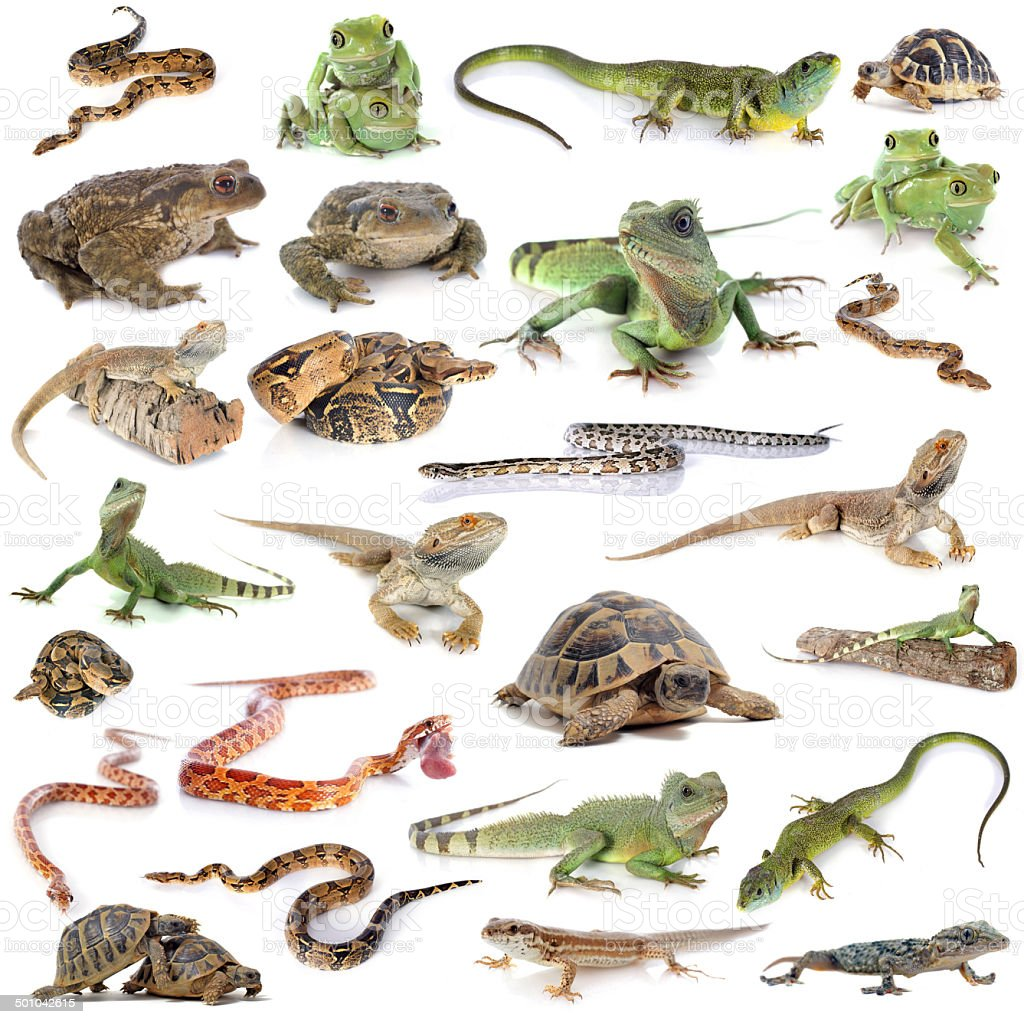 reptile and amphibian stock photo