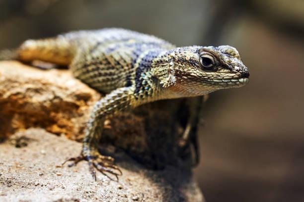 reptil – Foto