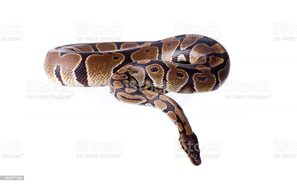 Reptile stock photo