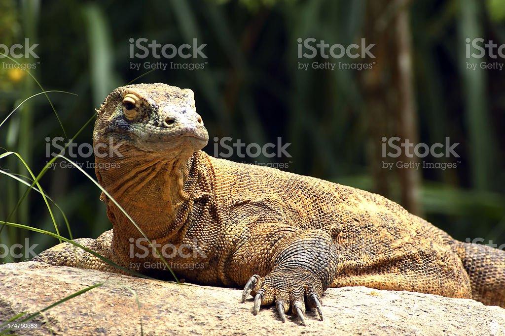 reptile stock photo