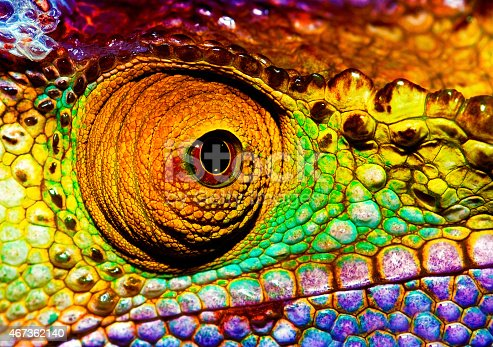 istock Reptilian eye 467362140