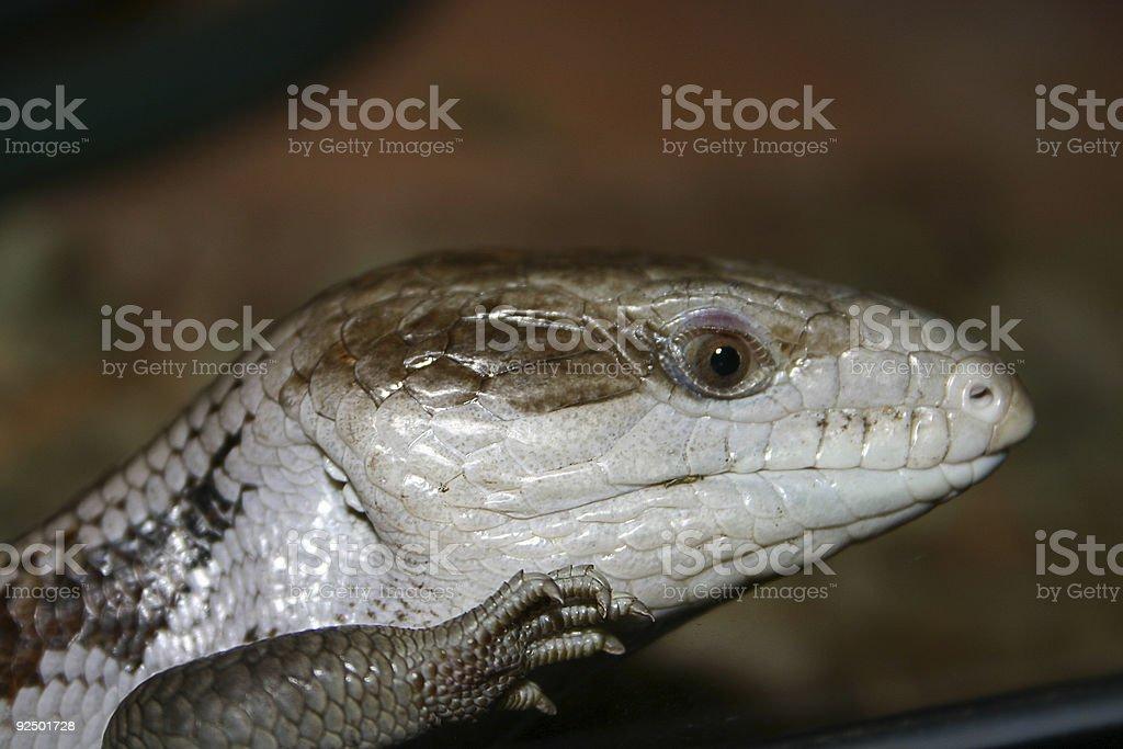 Macht Reptilien Staré Lizenzfreies stock-foto