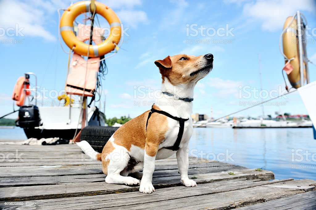 rescue dog on the docks. – Foto