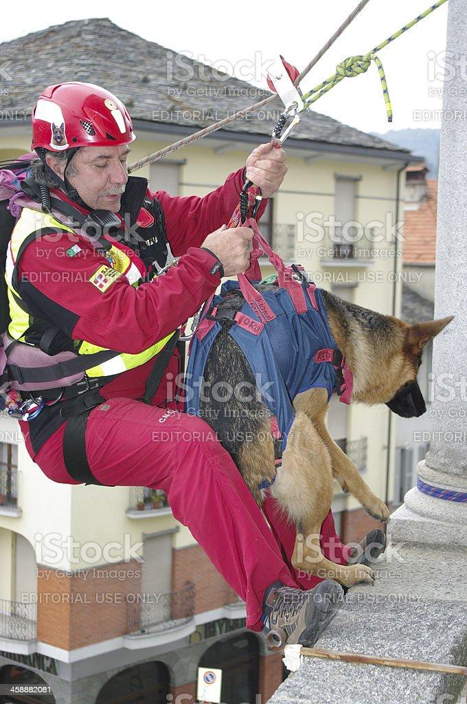 Rescue dog royalty-free stock photo