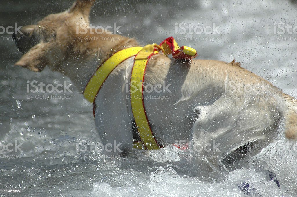 Rescue Dog Stock Photo - Download Image Now - iStock