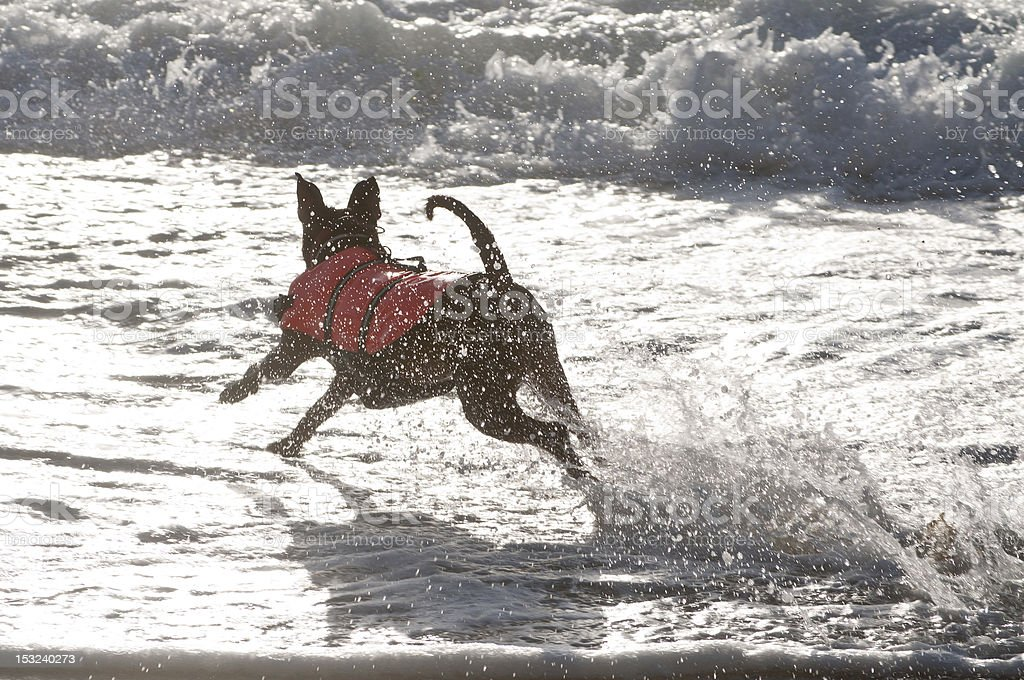 rescue dog running stock photo